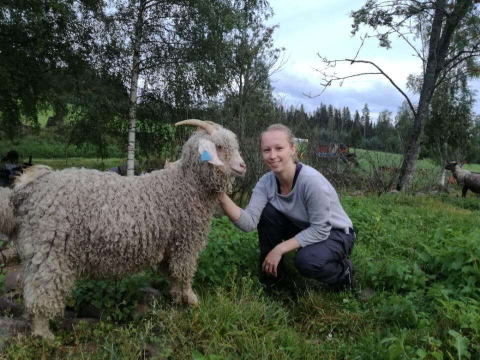 Ferme Furuberget en Norvège