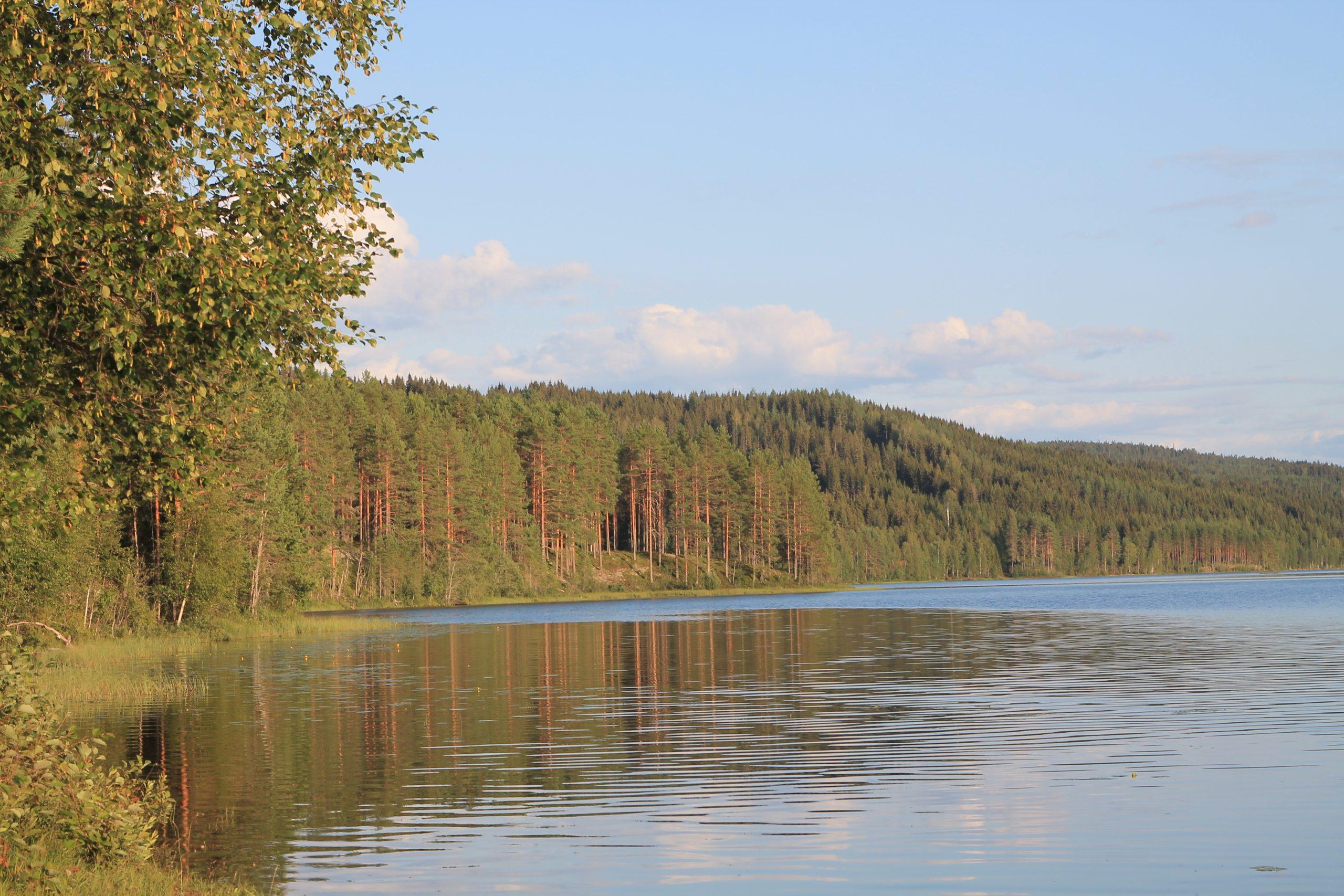 Forêt de Finnskogen en Norvège