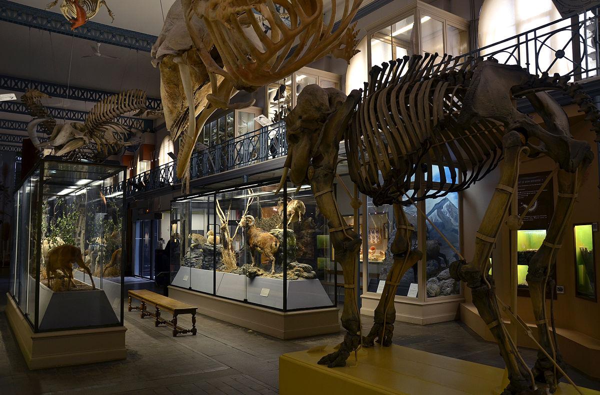 musée d'histoire naturelle de lille, travaux