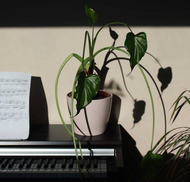plante fleur piano meuble appartement décoration