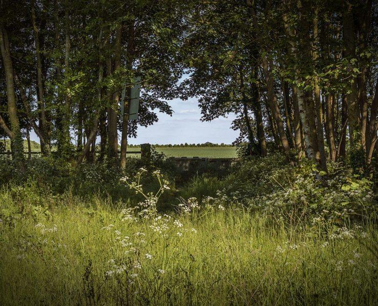 La forêt de Bénifontaine, dans le Pas-de-Calais. Crédit photo : Matteo Urru / Gerda